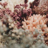 Taller Floral Flores en el Columpio y Peonías Eventos